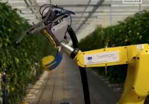 果蔬西红柿采摘机器人