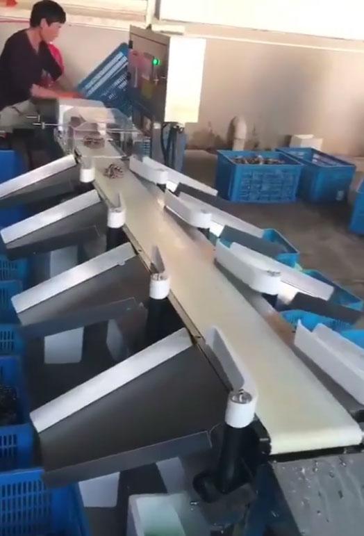螃蟹重量全自动分选机